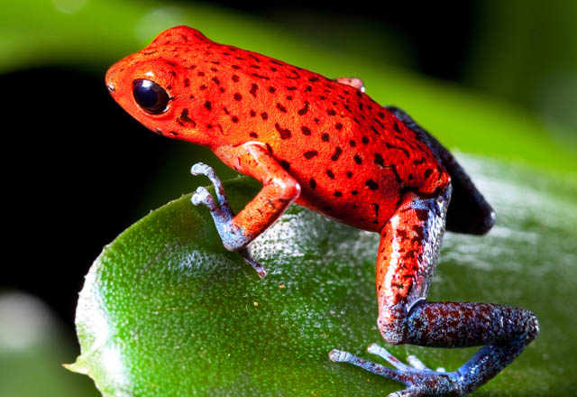 List of Amphibians in Kerala